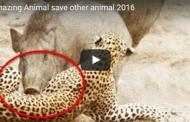 Amazing Animal save other animal 2016
