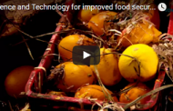 Science and Technology for improved food security