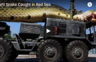 Giant Snake Caught in Red Sea